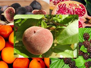 Testul fructelor in engleza
