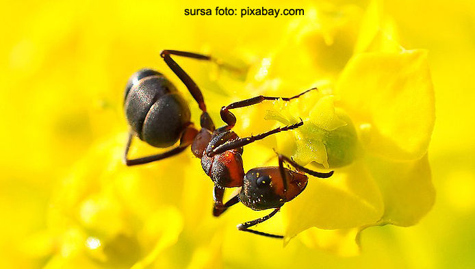Ce stii despre furnici?