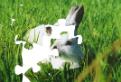 Puzzle cu animale din padure