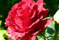 Testul florilor de vara
