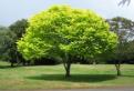 Testul copacilor