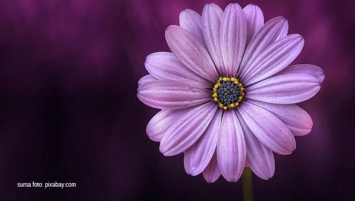 Ce spune floarea preferata despre tine?