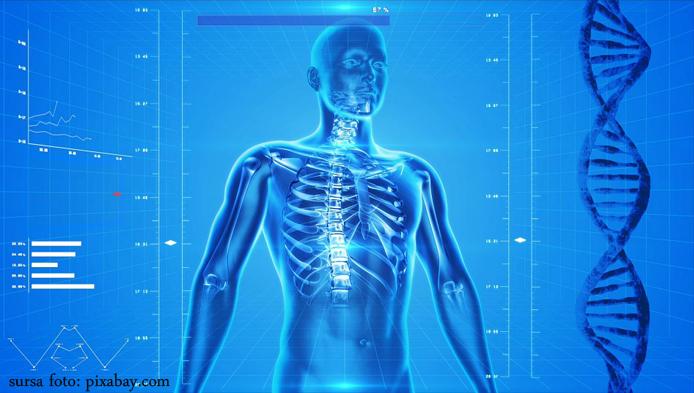 Alcatuirea scheletului uman