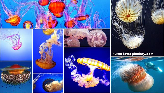 Test despre meduze