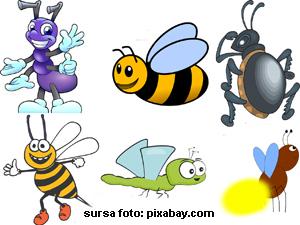 Testul insectelor vesele