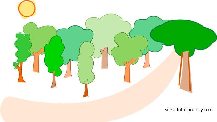 Ce spune despre tine copacul pe care il desenezi
