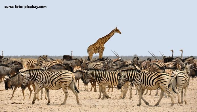 Cat de inalte sunt animalele?