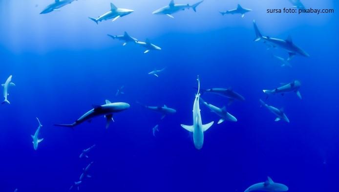 Cat de rapide sunt animalele acvatice?