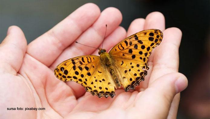 Ce stii despre fluturi?