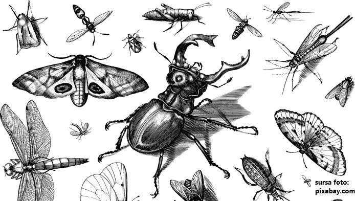 Testul curiozitatilor despre insecte