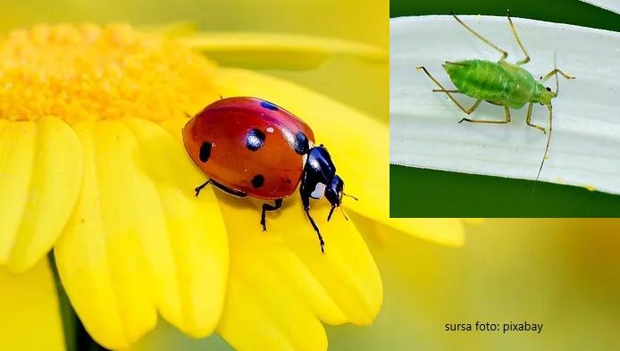 Insecte benefice pentru gradina