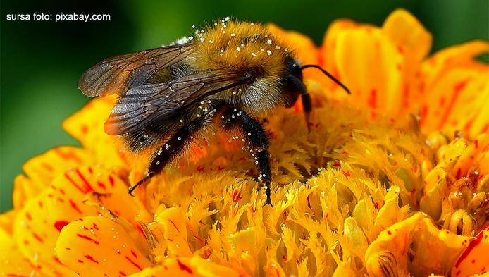Ce stii despre insecte?