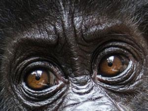 Stii ochii animalelor?