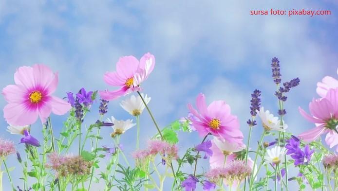 Test cu flori