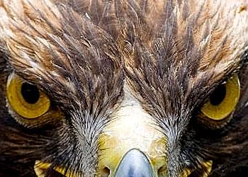 Stii ochii pasarilor?