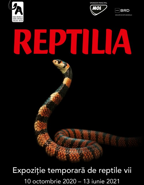 Reptilia - o noua expozitie temporara la Muzeul Antipa!